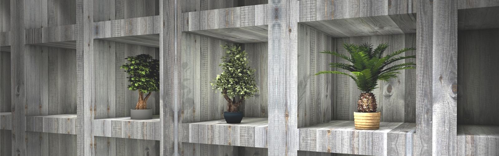 plants in their niche
